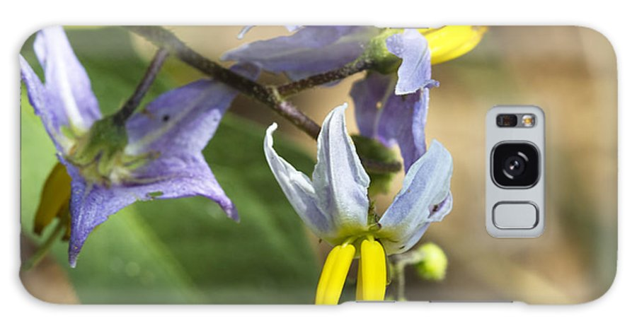 Solanum Carolinense Galaxy S8 Case featuring the photograph Horse Nettle Nightshade - Solanum Carolinense by Kathy Clark