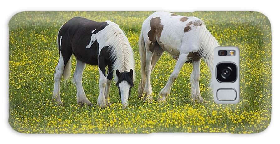 Graze Galaxy S8 Case featuring the photograph Horses Grazing, County Tyrone, Ireland by Gareth McCormack