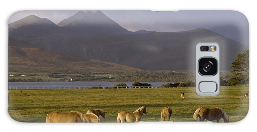 Ireland Galaxy S8 Case featuring the photograph Horses Grazing, Macgillycuddys Reeks by The Irish Image Collection