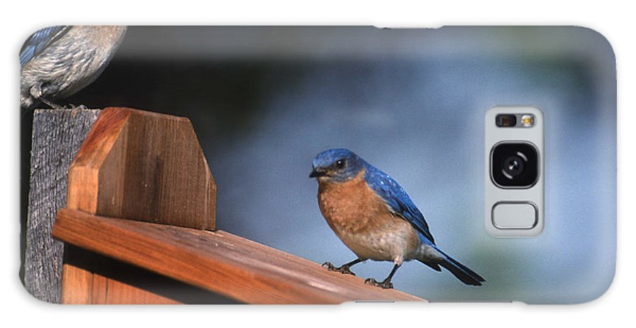 Blue Birds Galaxy S8 Case featuring the photograph House Inspection by Skip Willits