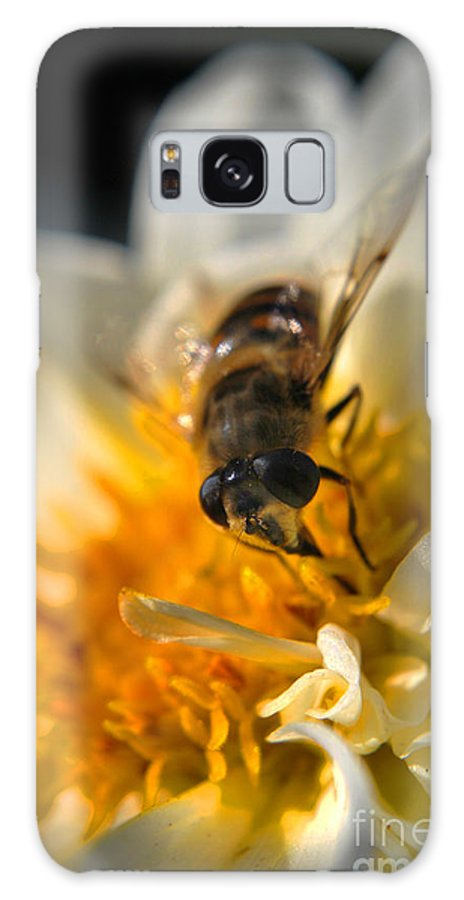 Yhun Suarez Galaxy S8 Case featuring the photograph Hoverfly On White Flower by Yhun Suarez