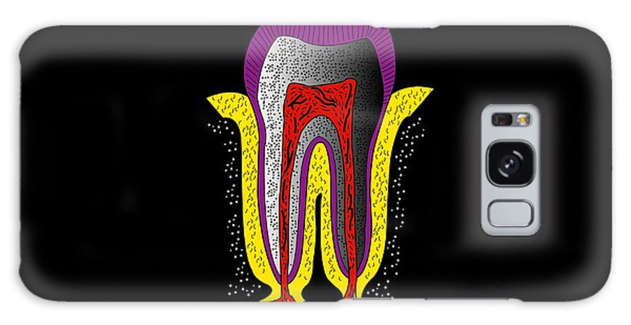 Mineral Galaxy S8 Case featuring the photograph Human Tooth Anatomy, Artwork by Francis Leroy, Biocosmos