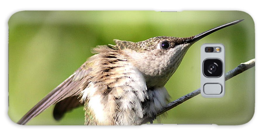 Hummingbird Galaxy S8 Case featuring the photograph Hummingbird - Ruby-throated Hummingbird - Stretch Time by Travis Truelove