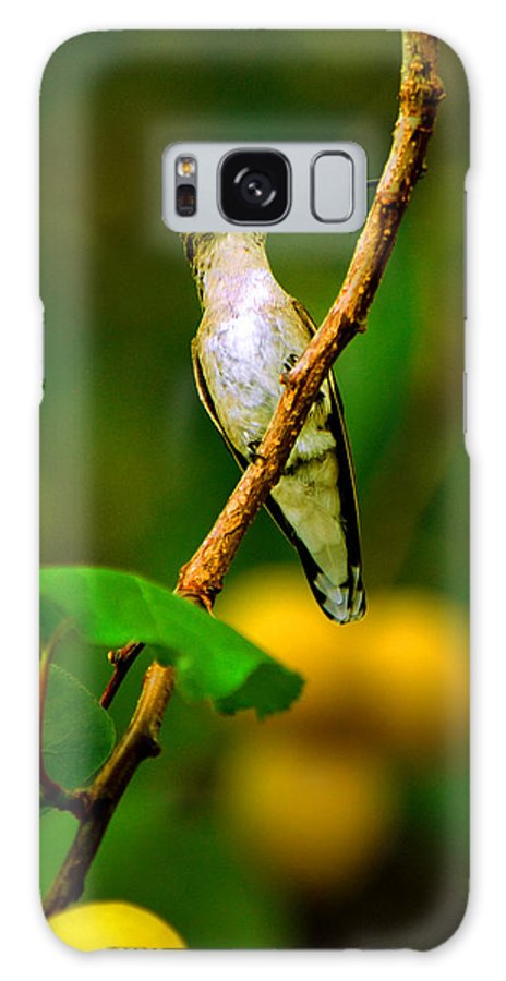 Hummingbird Galaxy S8 Case featuring the photograph Hummingbird In Apricots by Susanne Still