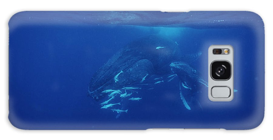 Young Galaxy S8 Case featuring the photograph Humpback Whale Calf And Mother by Alexis Rosenfeld