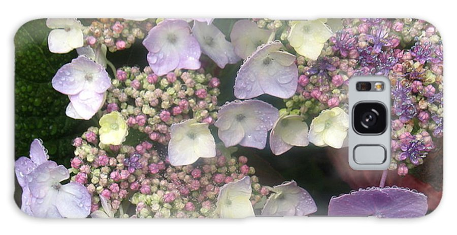Flower Galaxy S8 Case featuring the photograph Hydrangea by Angie Vogel