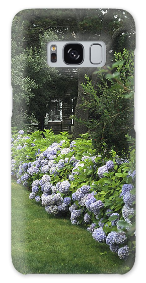 Plants Galaxy S8 Case featuring the photograph Hydrangeas In Bloom Along A Landscaped by Darlyne A. Murawski
