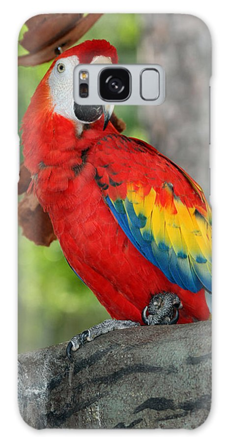 Busch Gardens Galaxy S8 Case featuring the photograph I See You by Karen Harrison