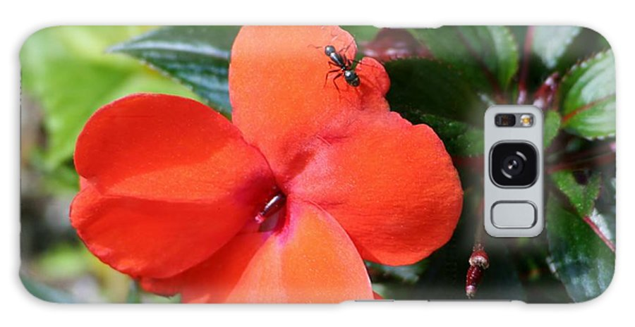 Galaxy S8 Case featuring the photograph Impatient Ant by Barbara S Nickerson