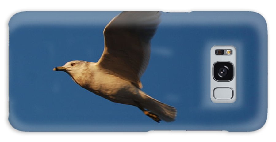 Bird Galaxy S8 Case featuring the photograph In Flight by Richard Bryce and Family