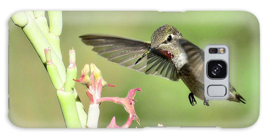 Anna's Hummingbird Galaxy S8 Case featuring the photograph In For A Landing by Saija Lehtonen