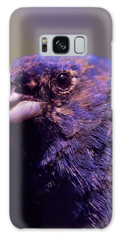 Indigo Bunting Galaxy S8 Case featuring the photograph Indigo Bunting - Molting Male by Rory Cubel