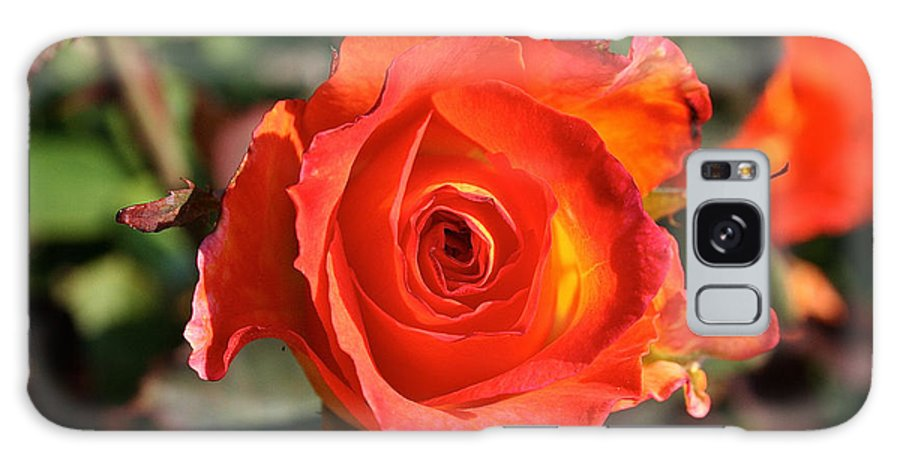 Outdoors Galaxy S8 Case featuring the photograph Intense Rose by Susan Herber