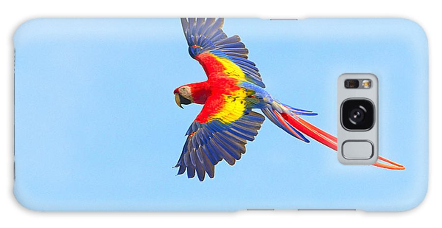 Scarlet Macaw Galaxy S8 Case featuring the photograph Into The Blue by Tony Beck