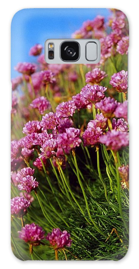 Close-up Galaxy S8 Case featuring the photograph Ireland Close-up Of Seapink Wildflowers by Gareth McCormack