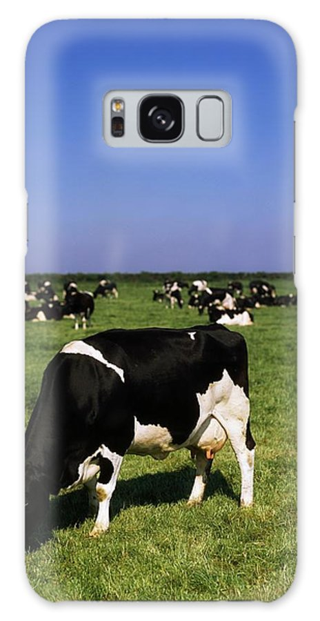 Horizon Galaxy S8 Case featuring the photograph Ireland Friesian Cattle by The Irish Image Collection