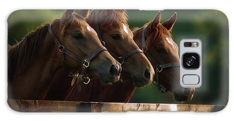 Day Galaxy S8 Case featuring the photograph Ireland Thoroughbred Horses by The Irish Image Collection