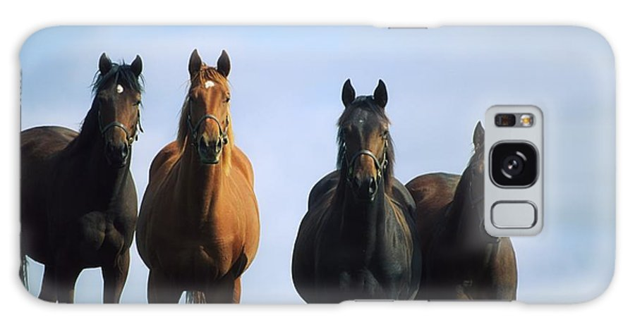 Blue Sky Galaxy S8 Case featuring the photograph Ireland Thoroughbred Yearlings by The Irish Image Collection