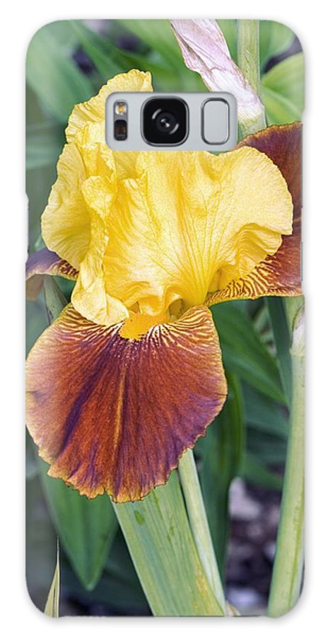 Iris All That Jazz Galaxy S8 Case featuring the photograph Iris 'all That Jazz' by Adrian Thomas
