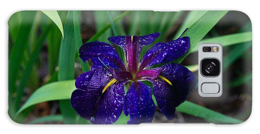 Iris Galaxy S8 Case featuring the photograph Iris With Rain Drops by Douglas Barnett