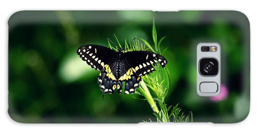 Butterfly Nature Green Photography  Galaxy S8 Case featuring the photograph It's Been A Rough Day by Robin Dickinson