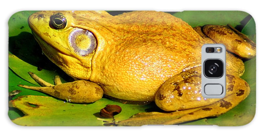 American Bullfrog Galaxy S8 Case featuring the photograph Its My Pad by Laurel Talabere