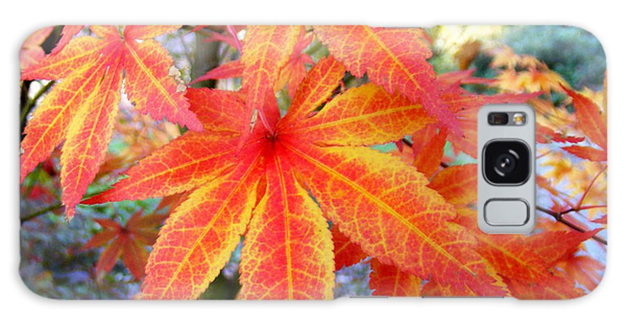 Fall Galaxy S8 Case featuring the photograph Japanese Maple Leaves 13 In The Fall by Duane McCullough