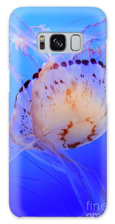 Jellyfish Galaxy S8 Case featuring the photograph Jellyfish 5 by Bob Christopher