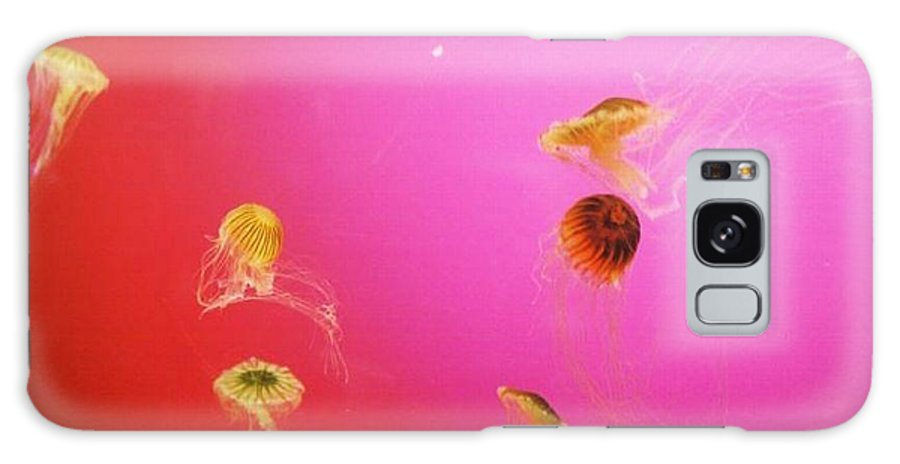 Jellyfish Galaxy S8 Case featuring the photograph Jellyfish by Samantha L