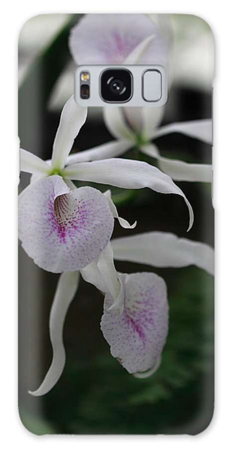 Flower Galaxy S8 Case featuring the photograph Julie's Orchid by Paul Slebodnick