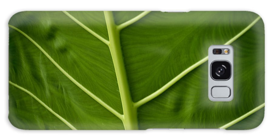 Jungle Galaxy S8 Case featuring the photograph Jungle Leaf by Blake Webster