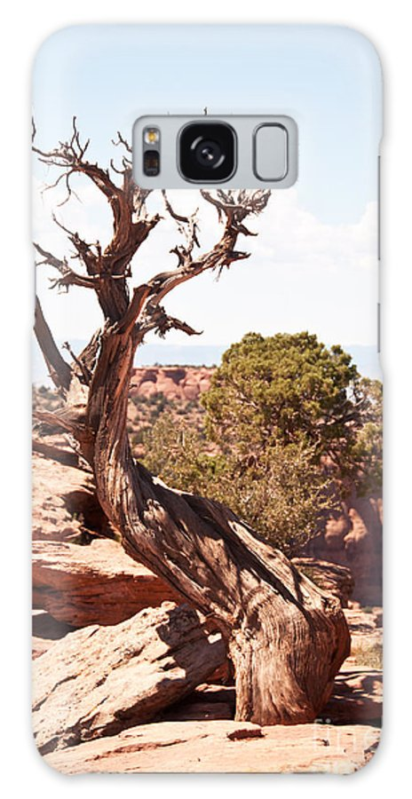 Juniper Galaxy S8 Case featuring the photograph Juniper - Colorado National Monument by Bob and Nancy Kendrick