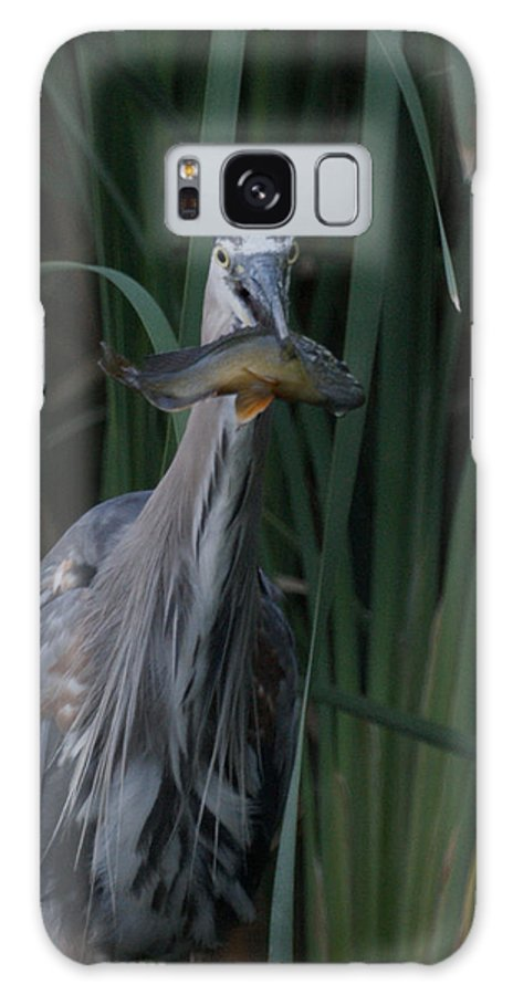 Animals Galaxy S8 Case featuring the photograph Just For You by Ernie Echols