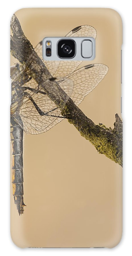 Fly Galaxy S8 Case featuring the photograph Just Hanging Around by Andy Astbury