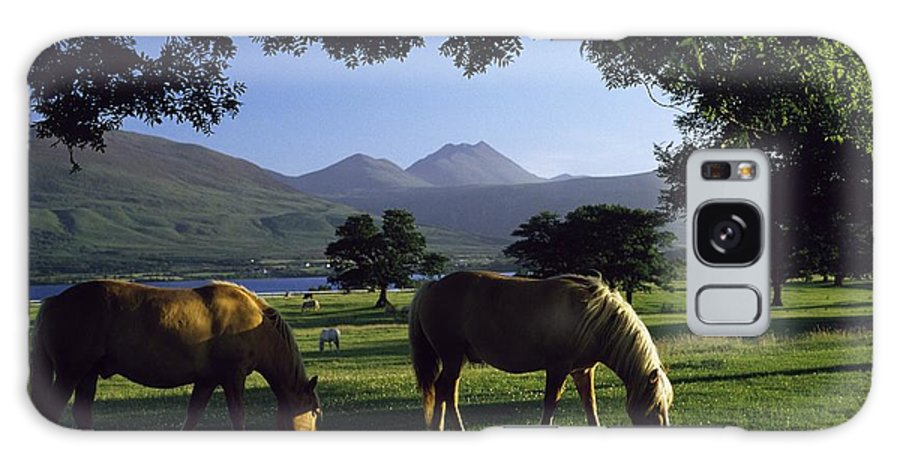 Kerry Galaxy S8 Case featuring the photograph Killarney,co Kerry,irelandtwo Horses by The Irish Image Collection