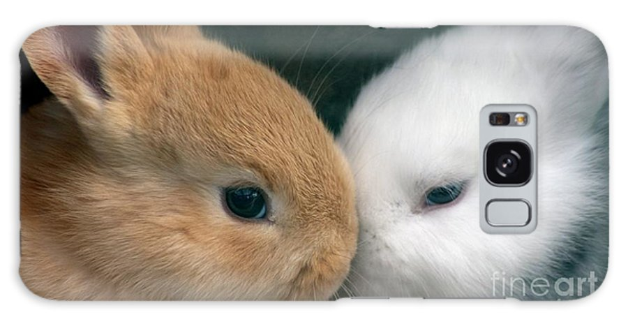 Rabbits Galaxy S8 Case featuring the photograph Kissing Cousin's by Living Color Photography Lorraine Lynch