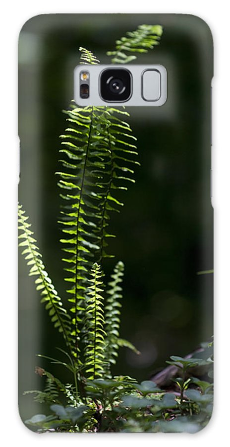 Fern Galaxy S8 Case featuring the photograph Lacy Wild Alabama Fern by Kathy Clark