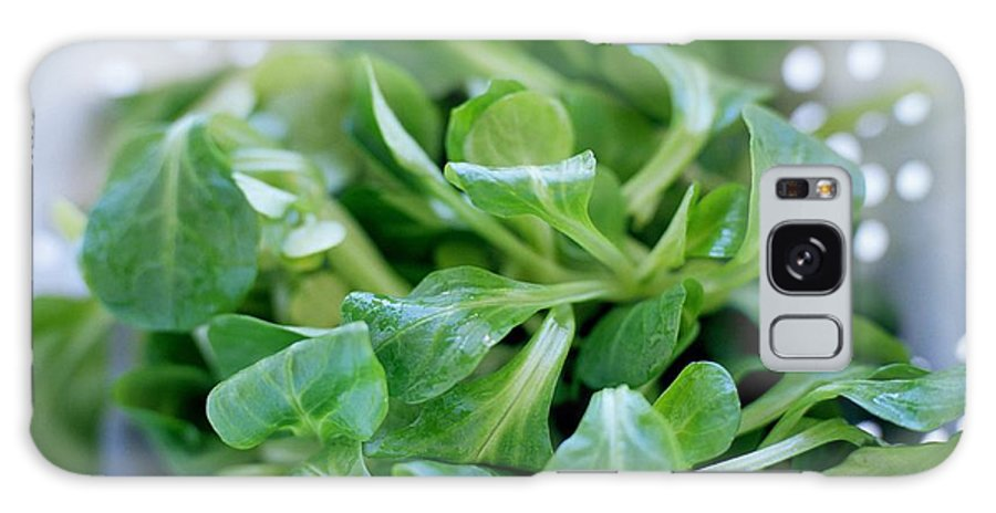 Valerianella Locusta Galaxy S8 Case featuring the photograph Lamb's Lettuce by David Munns