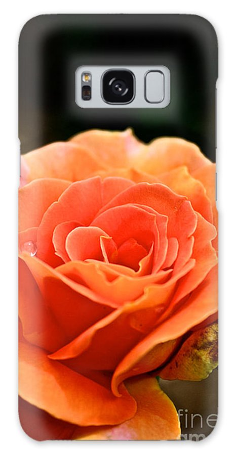 Garden Galaxy S8 Case featuring the photograph Last Drop by Susan Herber