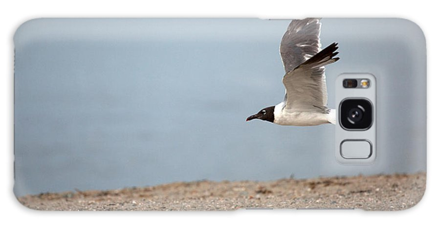 Gull Galaxy S8 Case featuring the photograph Laughing Gull In Flight by Karol Livote