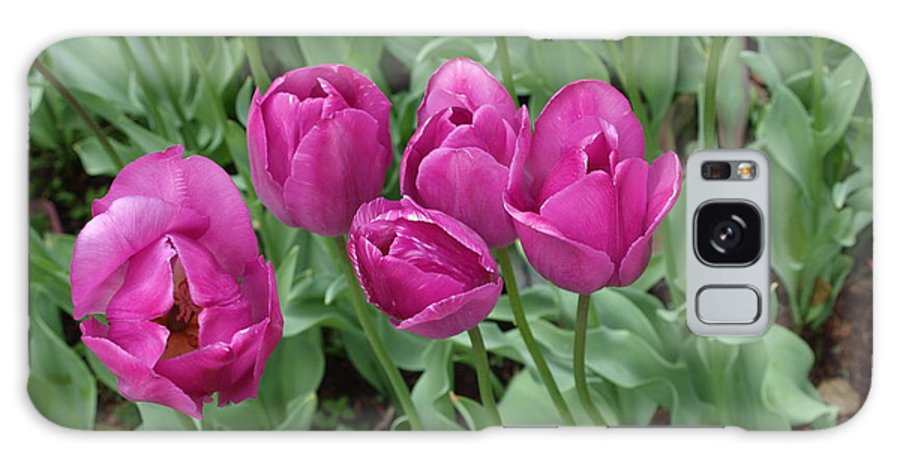 Flowers Galaxy S8 Case featuring the photograph Lavender Tulips by Larry Krussel