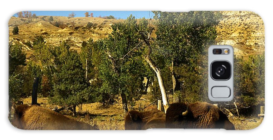 Theodore Roosevelt National Park Galaxy S8 Case featuring the photograph Laying Down On The Job by Adam Jewell