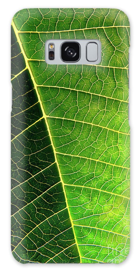 Abstract Galaxy S8 Case featuring the photograph Leaf Texture by Carlos Caetano