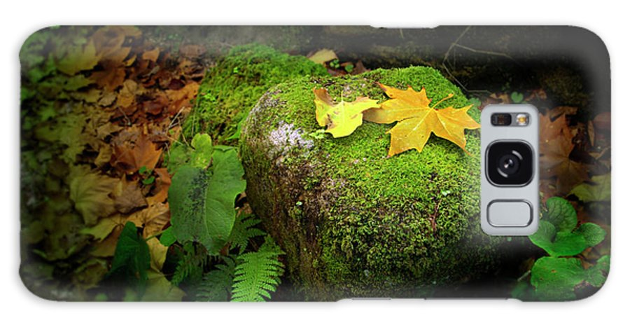Autumn Galaxy S8 Case featuring the photograph Leafs On Rock by Carlos Caetano