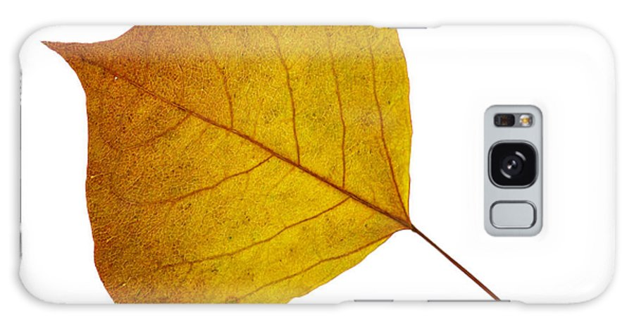 Leaves Galaxy S8 Case featuring the photograph Leaves Ten by Ken Frischkorn