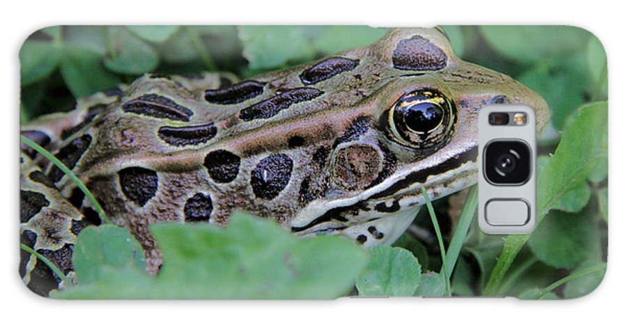 Leopard Frog Galaxy S8 Case featuring the photograph Leopard Frog by Doris Potter