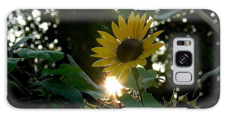 Plant Galaxy S8 Case featuring the photograph Let The Sun Shine by Ericamaxine Price