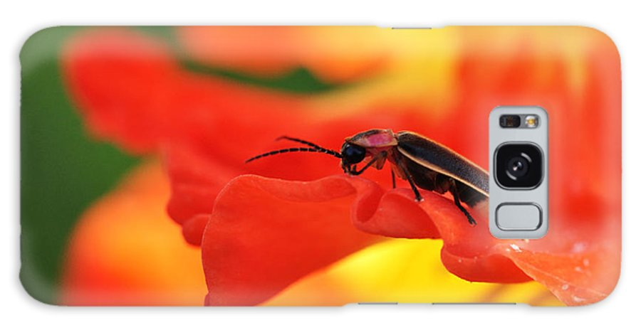 Firefly Galaxy S8 Case featuring the photograph Lightning Bug On Gladiolus by Thomas R Fletcher