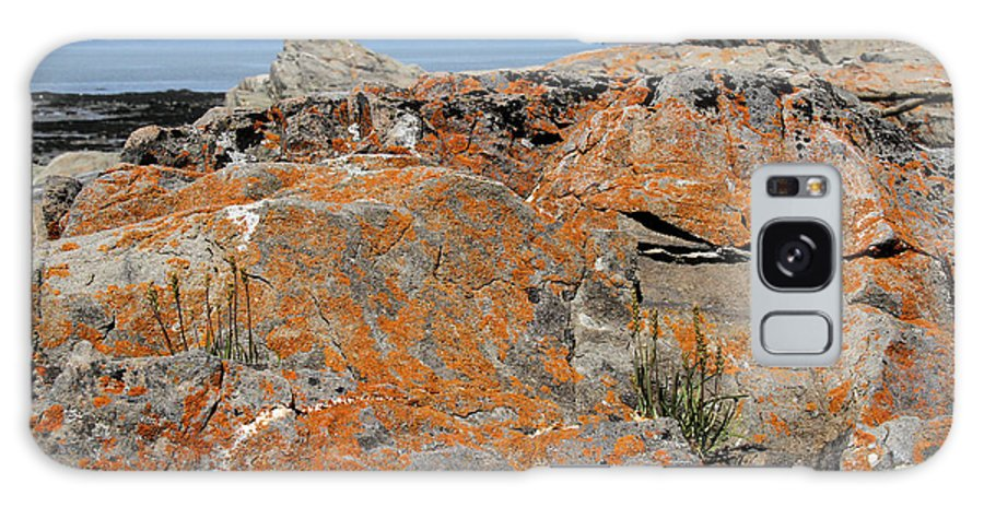 Orange Lichen Galaxy S8 Case featuring the photograph Likin' The Lichen by Doris Potter