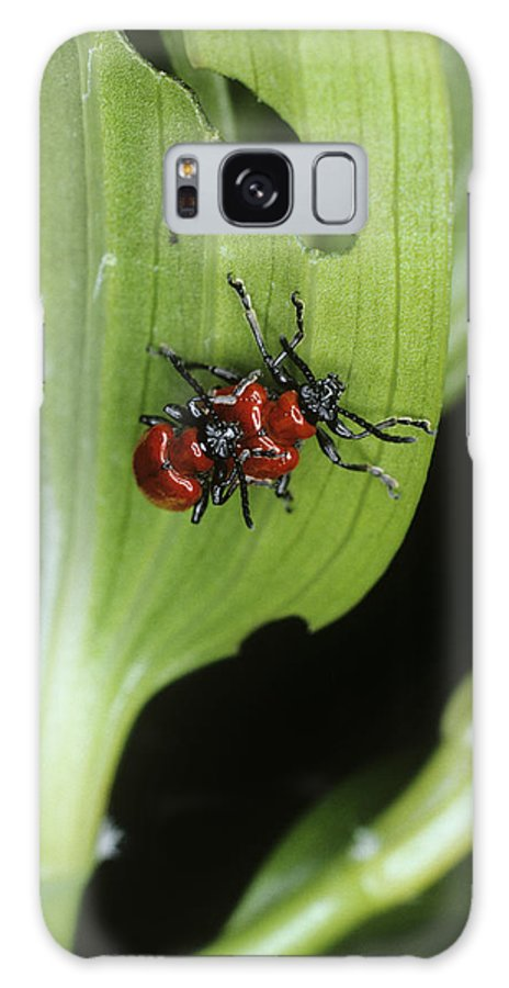 Lily Galaxy S8 Case featuring the photograph Lily Beetles Mating by Dr Jeremy Burgess